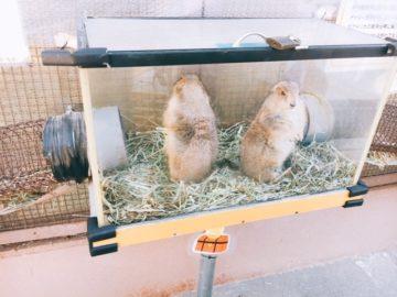 須坂市動物園