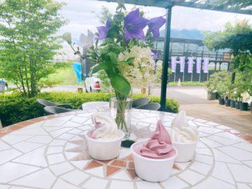 【ブルーベリー農園 森の畑】ブルーベリー食べ放題!ブルーベリーソフトクリームやジェラートもあるよ!