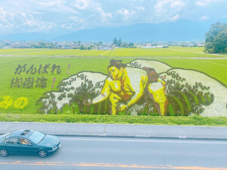 【2021田んぼアート御嶽海】安曇野のスイス村前で田んぼアート開催中!9月2