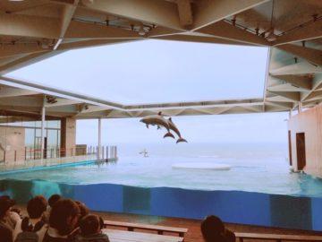 うみがたり上越水族館にリニューアル後、初来館。大迫力のイルカショーが見られます!